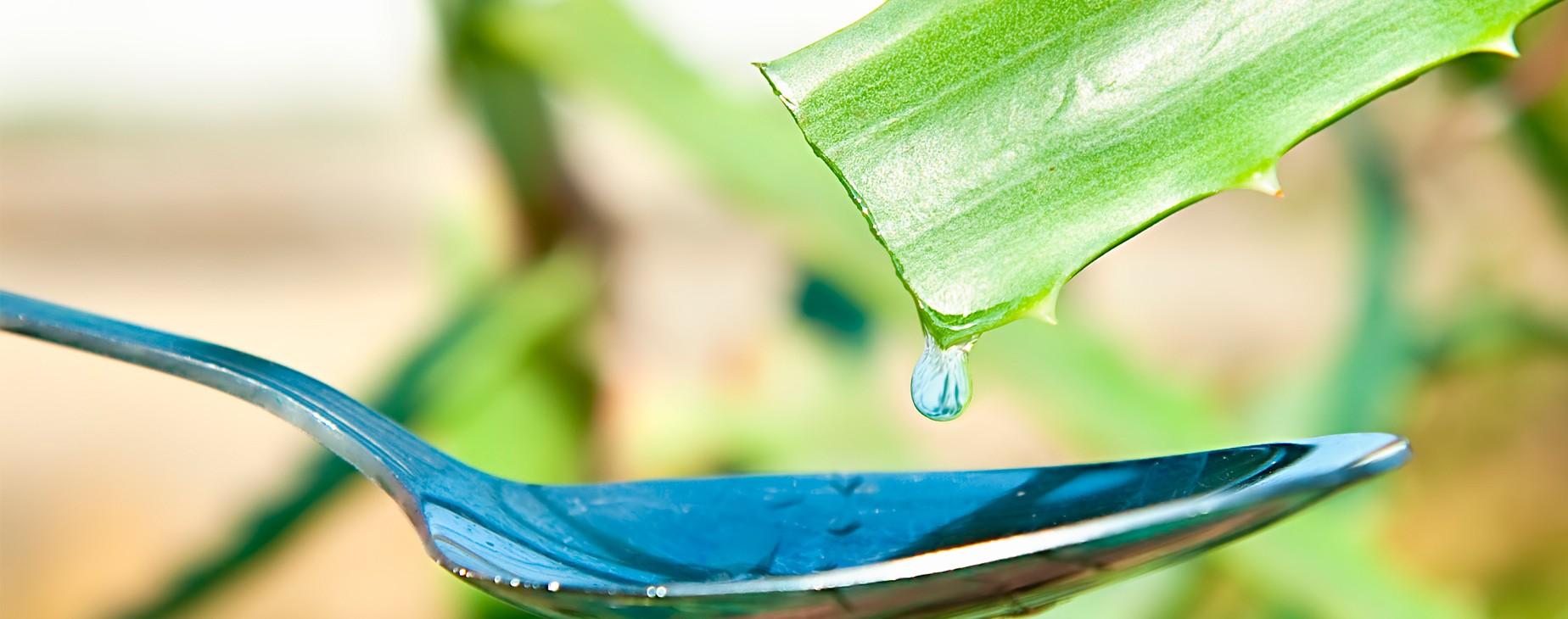 Beneficios del aloe vera apra la salud